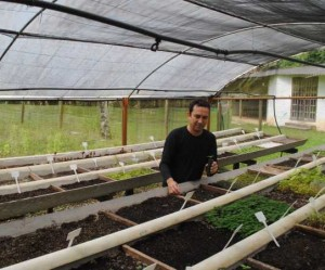 110915-mudas-prontas-para-venda-estufa-sementeira